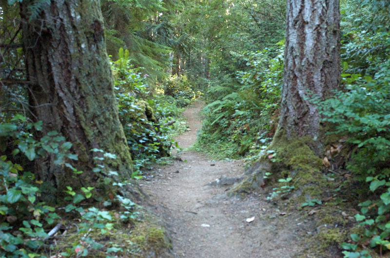 A sedate section of the trail.