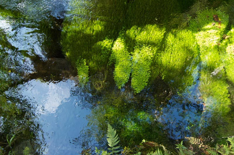 It's hard to imagine something a more vivid green than this water weed.